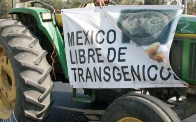Mexico bans glyphosate and GM corn